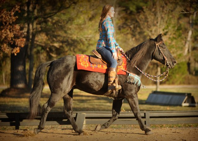 025-Thunder2-black-aqha-gelding-for-sale