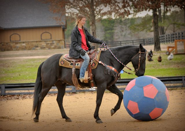 026-Cajun-Black-quarter-horse-for-sale