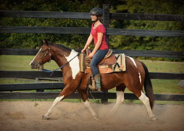 026-Lena-APHA-mare-for-sale