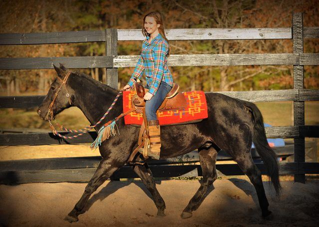 026-Thunder2-black-aqha-gelding-for-sale