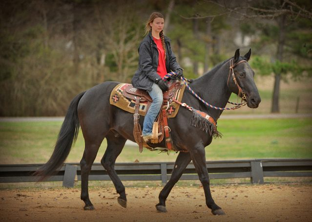 027-Cajun-Black-quarter-horse-for-sale
