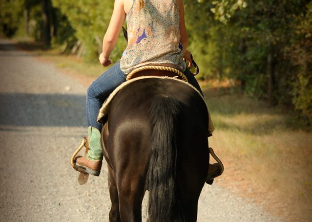 027-Hollywood-AQHA-gelding-for-sale