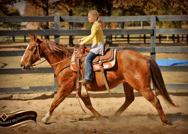 027-Jack2-Chestnut-AQHA-Gelding-For-Sale