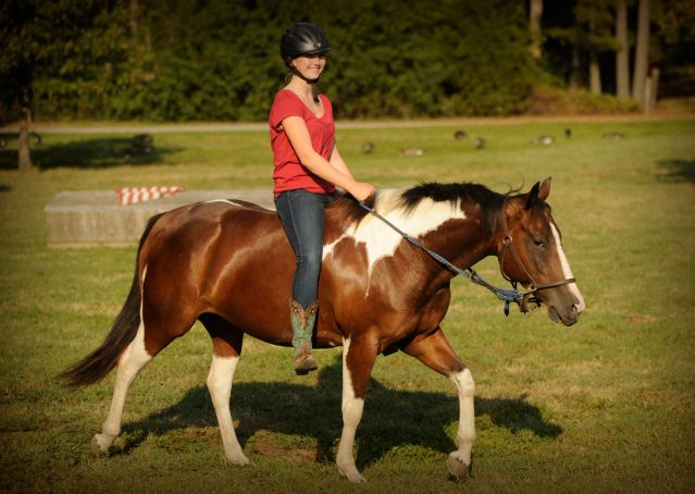 027-Lena-APHA-mare-for-sale