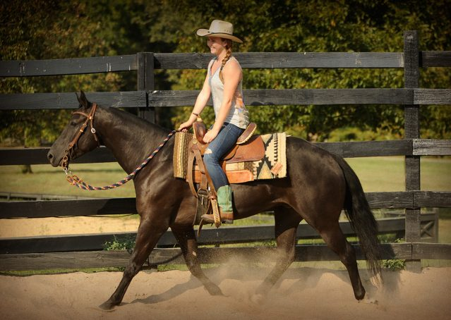 028-Hollywood-AQHA-gelding-for-sale