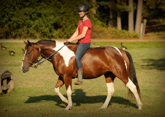028-Lena-APHA-mare-for-sale