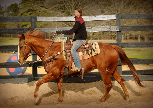 028-Punchy-Sorrel-AQHA-gelding-for-sale