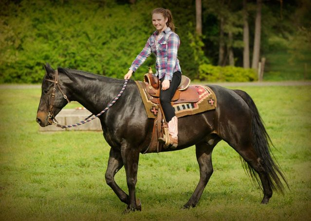 028-gunner-AQHA-gelding-for-sale