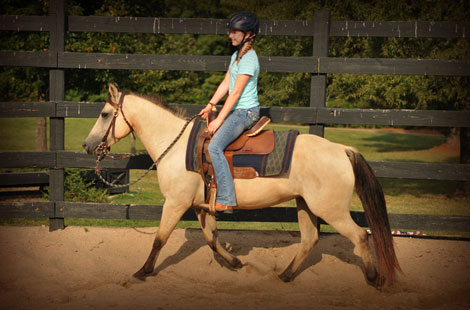 030-Buckskin-Pony-Mare-For-Sale-Jill