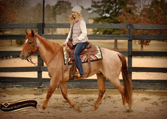 002-Pep-Red-Roan-AQHA-Gelding-For-Sale