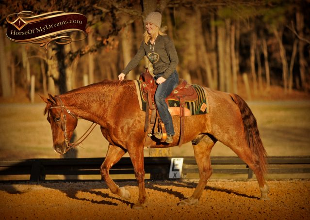 006-Coyote-Red-Roan-Gelding-For-Sale