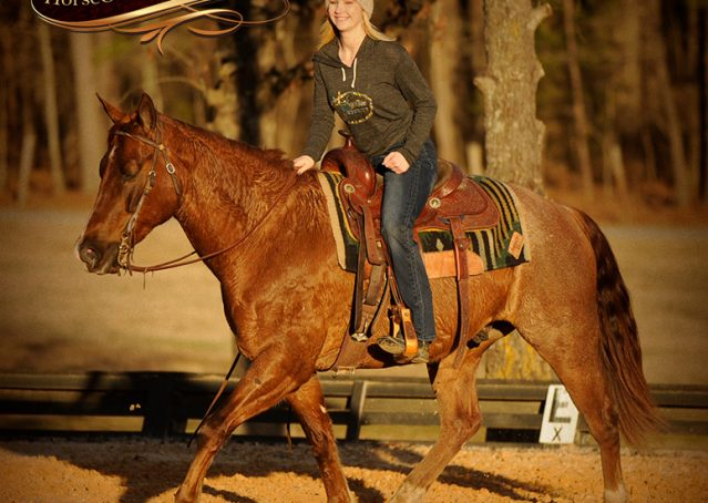 007-Coyote-Red-Roan-Gelding-For-Sale