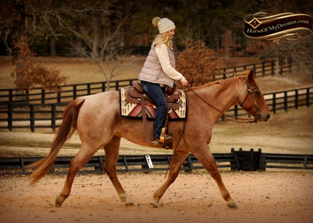 007-Pep-Red-Roan-AQHA-Gelding-For-Sale