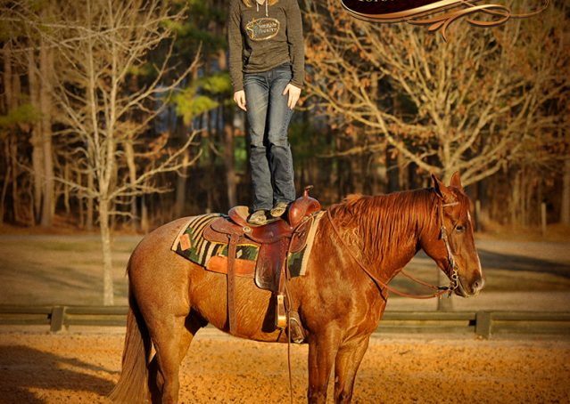 009-Coyote-Red-Roan-Gelding-For-Sale
