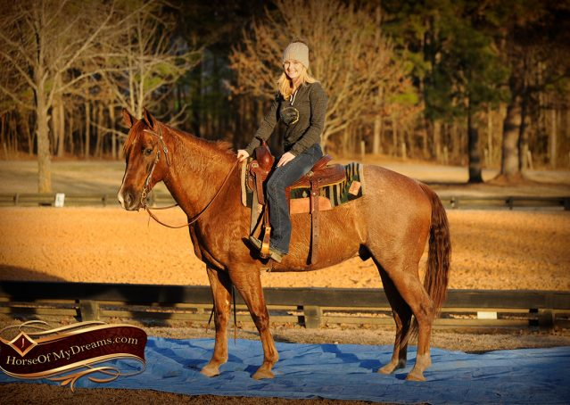 011-Coyote-Red-Roan-Gelding-For-Sale