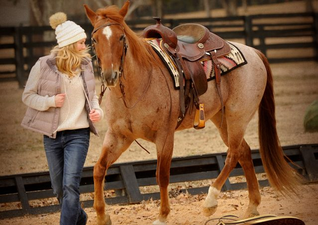 011-Pep-Red-Roan-AQHA-Gelding-For-Sale