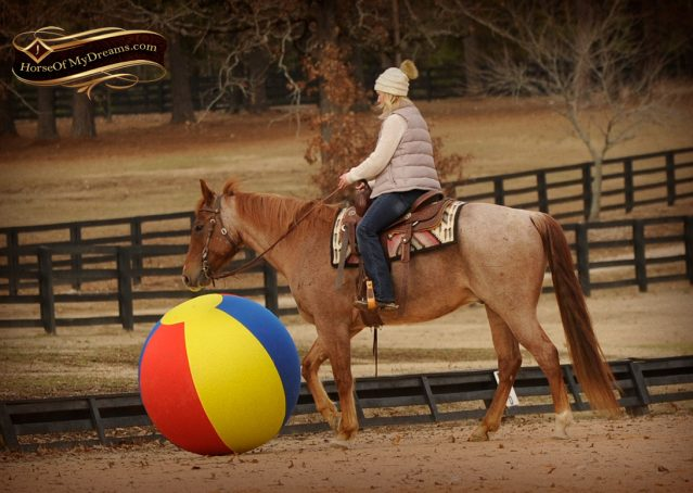 014-Pep-Red-Roan-AQHA-Gelding-For-Sale
