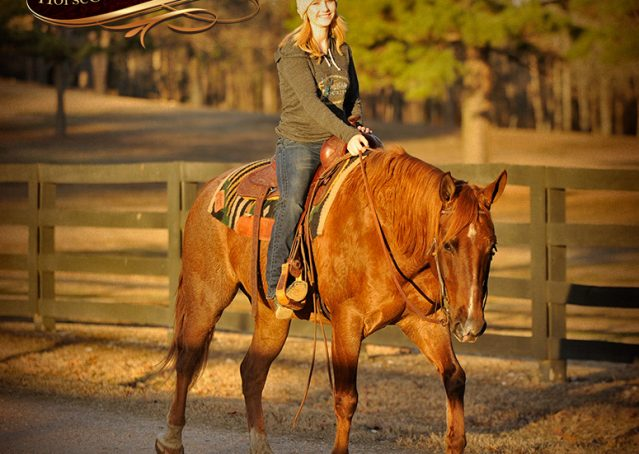 016-Coyote-Red-Roan-Gelding-For-Sale