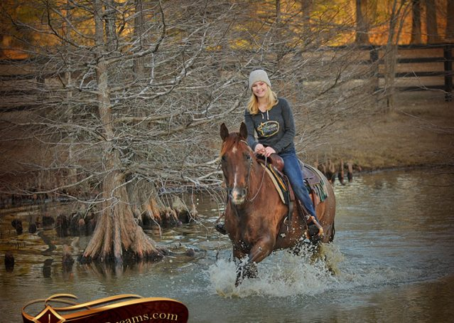 017-Coyote-Red-Roan-Gelding-For-Sale