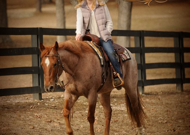 017-Pep-Red-Roan-AQHA-Gelding-For-Sale