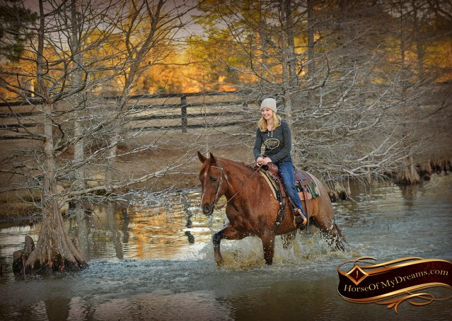 018-Coyote-Red-Roan-Gelding-For-Sale