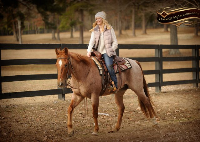 018-Pep-Red-Roan-AQHA-Gelding-For-Sale