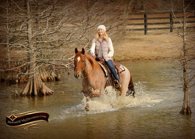 019-Pep-Red-Roan-AQHA-Gelding-For-Sale