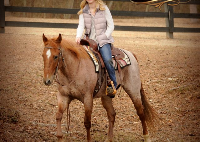 020-Pep-Red-Roan-AQHA-Gelding-For-Sale