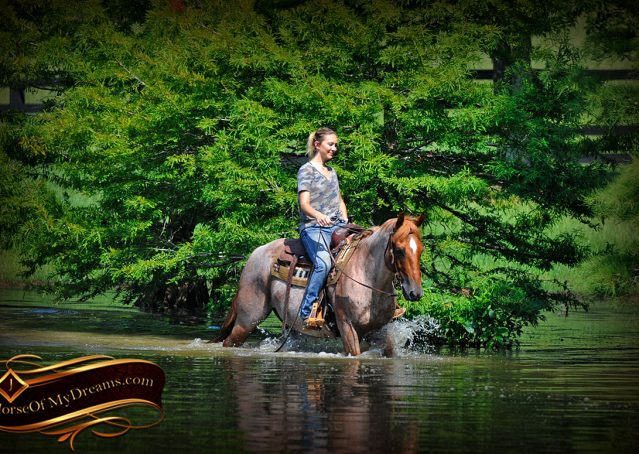 026-Pep-Red-Roan-AQHA-Gelding-For-Sale