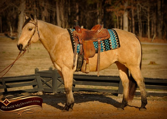 002-Cash-Buckskin-AQHA-Gelding-For-Sale