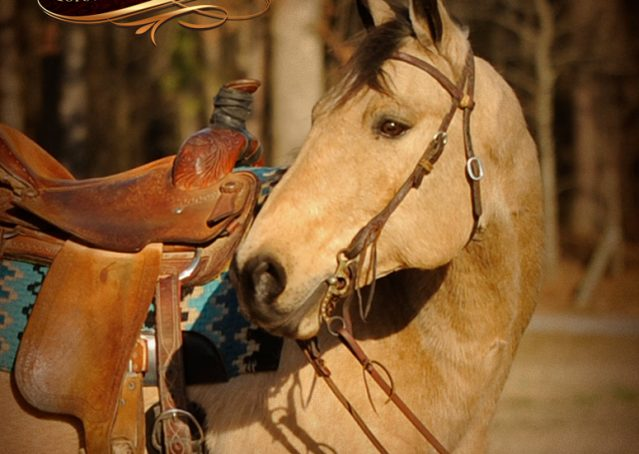 005-Cash-Buckskin-AQHA-Gelding-For-Sale