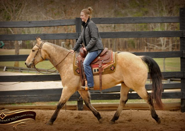 007-Cash-Buckskin-AQHA-Gelding-For-Sale
