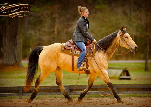 010-Cash-Buckskin-AQHA-Gelding-For-Sale