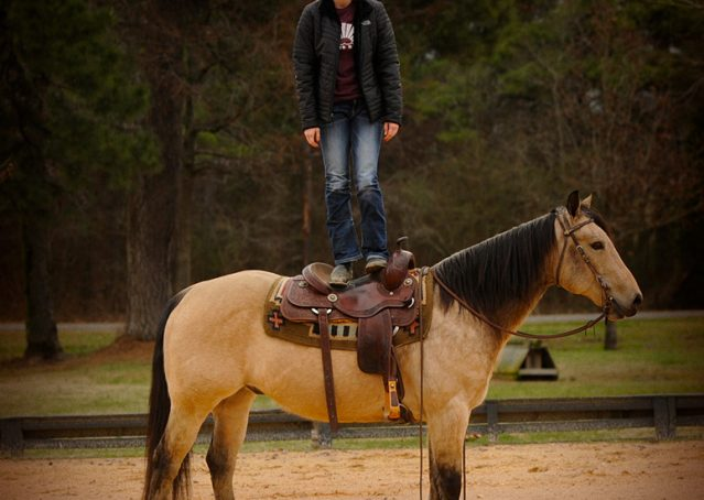 011-Cash-Buckskin-AQHA-Gelding-For-Sale