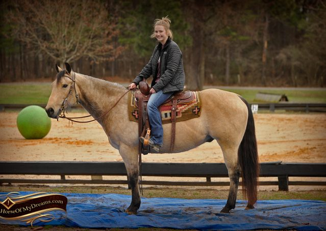 014-Cash-Buckskin-AQHA-Gelding-For-Sale