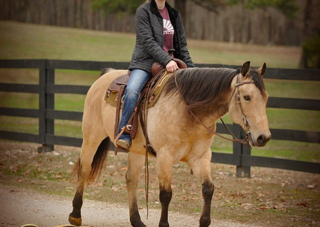 017-Cash-Buckskin-AQHA-Gelding-For-Sale