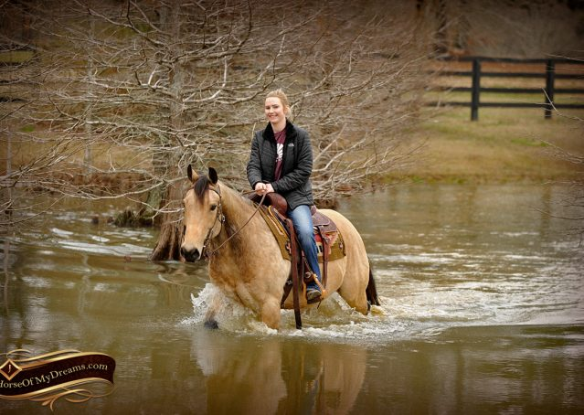 018-Cash-Buckskin-AQHA-Gelding-For-Sale