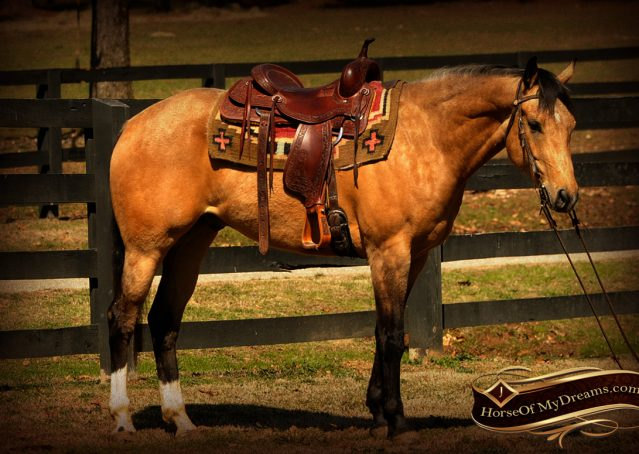 003-Native-Buckskin-AQHA-Gelding-For-Sale