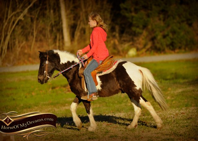 004-Sparky-black-and-white-pony-gelding-for-sale