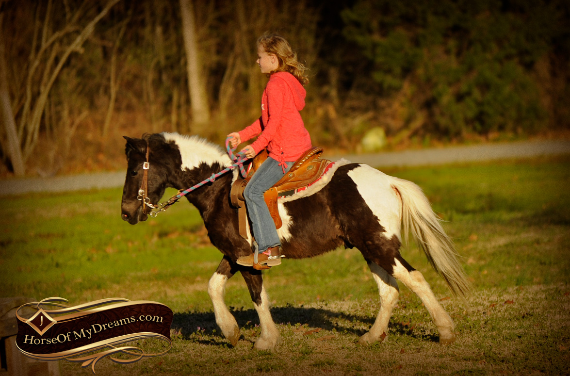Ponies For Sale Horse Of My Dreams