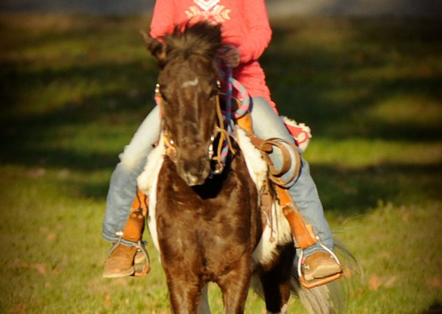 005-Sparky-black-and-white-pony-gelding-for-sale