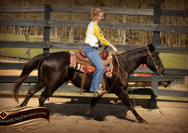 006-Coal-Black-Quarter-horse-gelding-for-sale