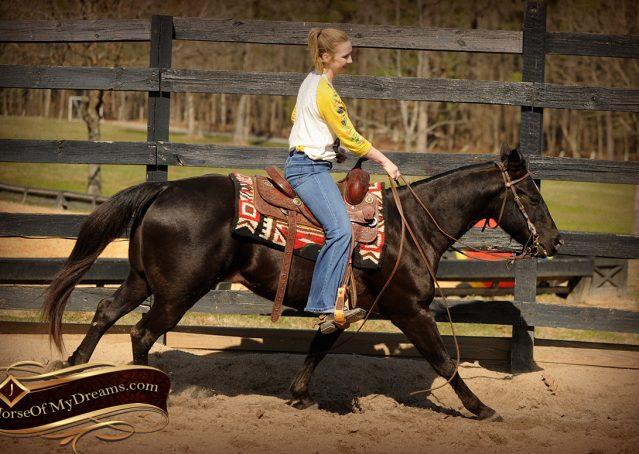 006-Coal-Black-Quarter-horse-gelding-for-sale