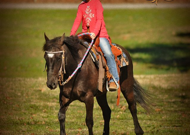 007-Dash-Black-Pony-Gelding-For-Sale