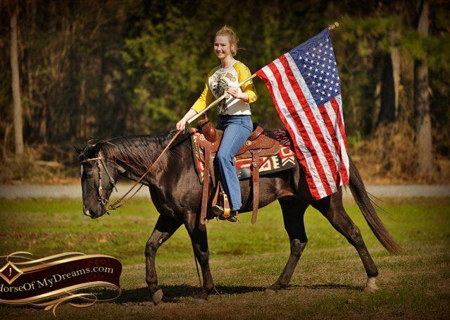 008-Coal-Black-Quarter-horse-gelding-for-sale