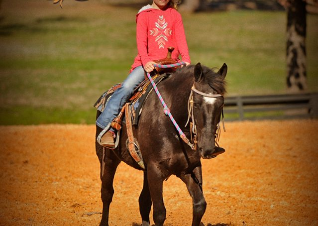 008-Dash-Black-Pony-Gelding-For-Sale