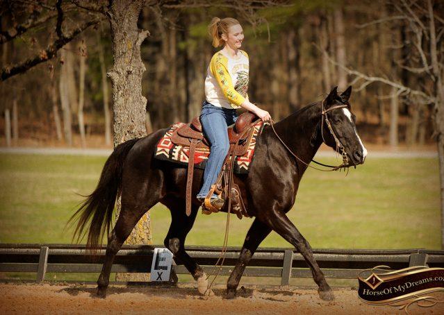 011-Coal-Black-Quarter-horse-gelding-for-sale