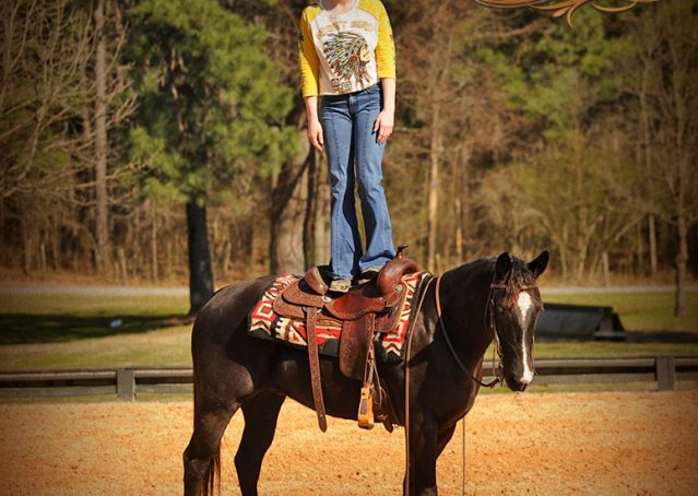 014-Coal-Black-Quarter-horse-gelding-for-sale