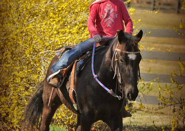 014-Dash-Black-Pony-Gelding-For-Sale