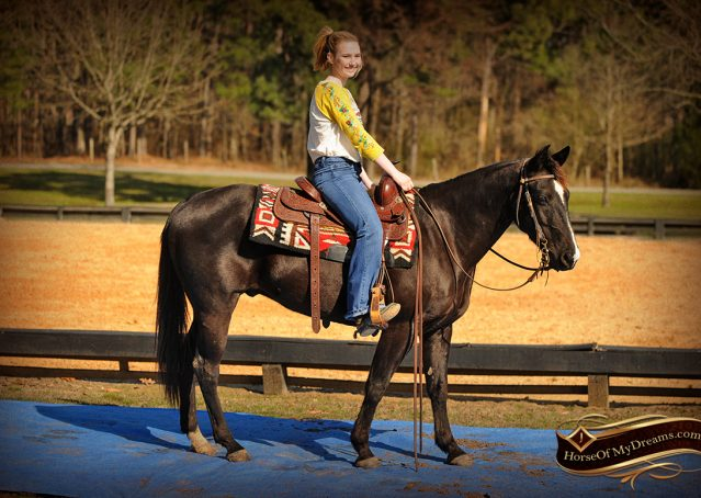 016-Coal-Black-Quarter-horse-gelding-for-sale